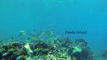 Pulau Tunda Serang