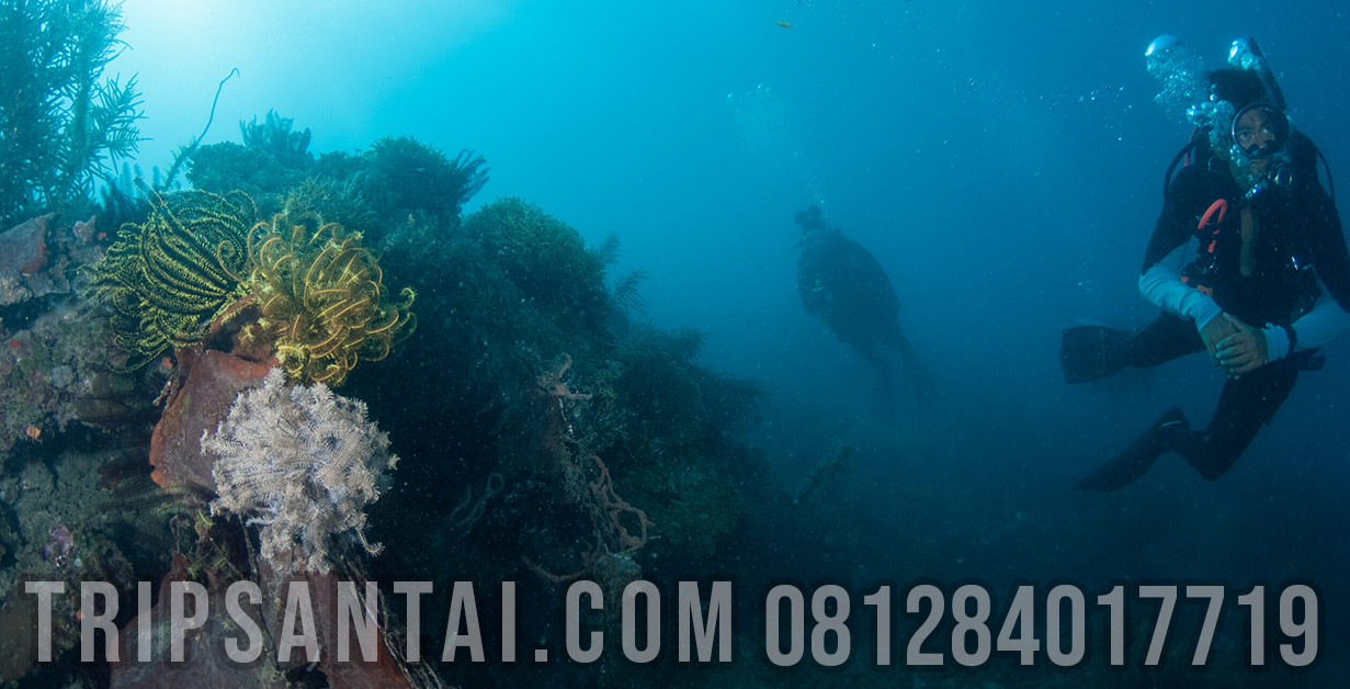 diving-sangiang-tripsantai