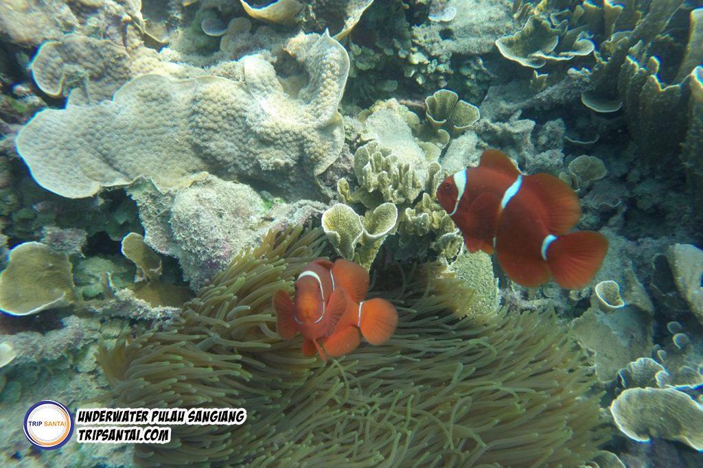 pulau sangiang trip santai