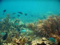 Wisata Pulau Tunda Banten 2D1N