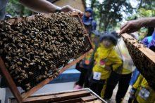 Wisata Sekolah Lebah Madu