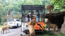 Wisata Sekolah Taman Safari Indonesia